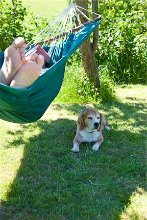 Man Lying on Hammock in Garden with Dog Stock Photo - Rights-Managed, Code: 822-03601862