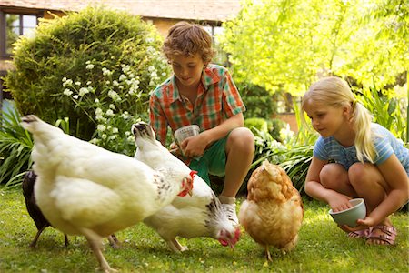 Boy and Girl Feeding Chickens in Garden Stock Photo - Rights-Managed, Code: 822-03780711