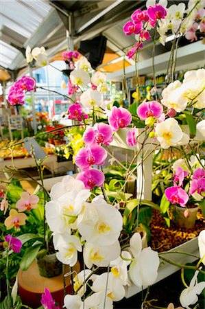 Flowers in a greenhouse Stock Photo - Rights-Managed, Code: 837-03070775