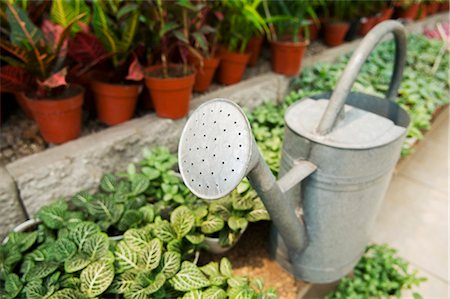 Watering can in a greenhouse Stock Photo - Rights-Managed, Code: 837-03072492