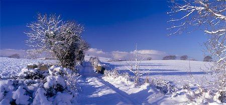 panoramic winter scene - Snowbound Lane, Near Burt Castle, Co Donegal, Ireland Stock Photo - Rights-Managed, Code: 832-02252843