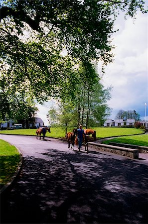 Ireland; Man leading Mares and Foals Stock Photo - Rights-Managed, Code: 832-03232706