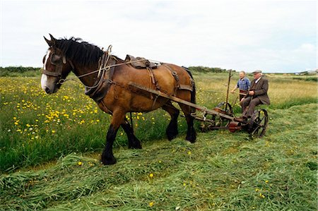 plow - Cutting Hay, Ireland Stock Photo - Rights-Managed, Code: 832-03640663