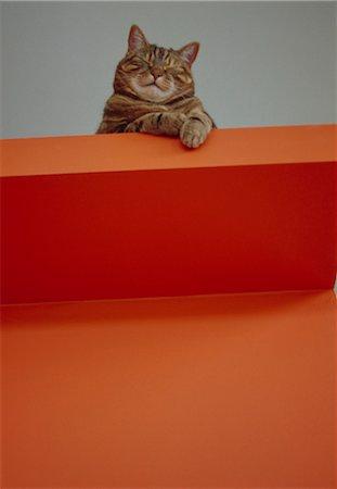 superior - Portrait of Big Fat Nancy the cat. Designed by Designed by David Churchill, Phillipa Vafadari Stock Photo - Rights-Managed, Code: 845-03777732