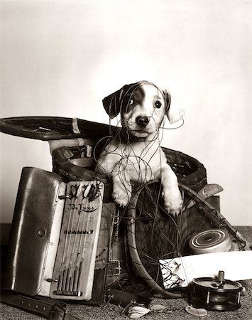 1950s DOG POPPING OUT OF BASKET TANGLED IN FISHING EQUIPMENT Stock Photo - Rights-Managed, Code: 846-05646265