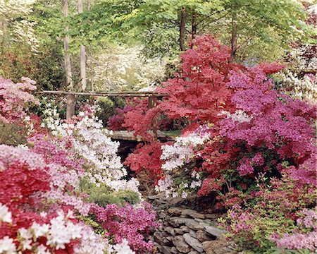 SPRING AZALEA GARDEN WITH FOOT BRIDGE OVER STREAM Stock Photo - Rights-Managed, Code: 846-05646963
