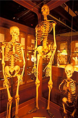 dwarf - PHILADELPHIA PA NORMAL GIANT AND DWARF HUMAN SKELETONS ON DISPLAY AT THE MUTTER MUSEUM Stock Photo - Rights-Managed, Code: 846-06112096