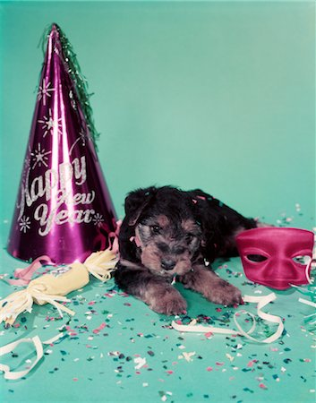 1950s HAPPY NEW YEAR PAPER HAT STREAMERS CONFETTI RED MASK & 7 WEEK OLD WELSH TERRIER PUPPY DOG ON BLUE GREEN SEAMLESS Stock Photo - Rights-Managed, Code: 846-02794894