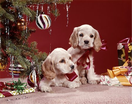 1960s COCKER SPANIEL PUPPIES UNDER CHRISTMAS TREE ORNAMENTS PRESENTS Stock Photo - Rights-Managed, Code: 846-02795272