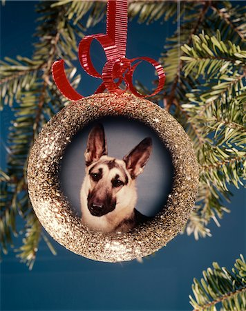 1960s 1970s PICTURE GERMAN SHEPHERD DOG ON CHRISTMAS TREE ORNAMENT Stock Photo - Rights-Managed, Code: 846-02795320