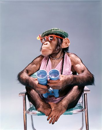 1960s 1970s CHIMPANZEE HOLDING BINOCULARS WEARING HAT SUNGLASSES SITTING BEACH CHAIR Stock Photo - Rights-Managed, Code: 846-02795349