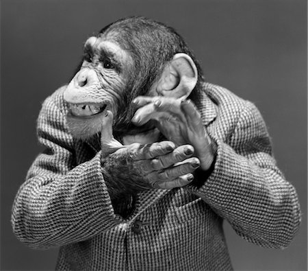 MONKEY CHIMP CHIMPANZEE DRESSED BUSINESS SPORT JACKET CLAPPING HANDS SMILING FUNNY HUMANIZED CHARACTER APPLAUSE Stock Photo - Rights-Managed, Code: 846-02797934