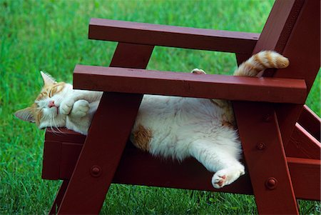 RED TABBY AND WHITE CAT ASLEEP ON CHAIR OUTDOORS Stock Photo - Rights-Managed, Code: 846-03164011