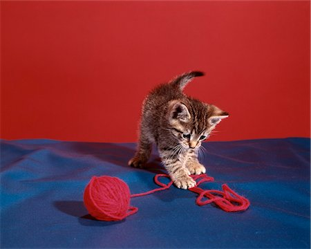 TABBY KITTEN PLAYING WITH RED YARN Stock Photo - Rights-Managed, Code: 846-03164077