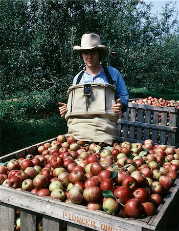 family apple orchard - YOUNG MAN HARVESTING JONATHAN APPLES MISSOURI Stock Photo - Rights-Managed, Code: 846-03164236