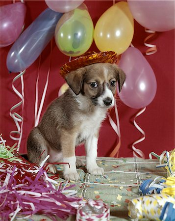 1960s DOG PARTY BALLOONS STREAMERS Stock Photo - Rights-Managed, Code: 846-03165116