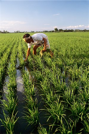 south - FARMER PLANTING RICE CARMOMA PHILIPPINES Stock Photo - Rights-Managed, Code: 846-03165262