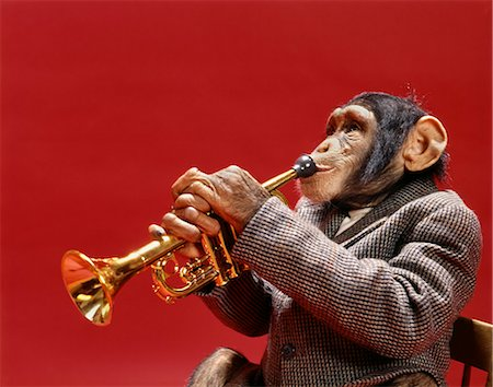 1960s MONKEY CHIMPANZEE PLAYING TRUMPET Stock Photo - Rights-Managed, Code: 846-03166339