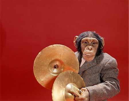 1960s MONKEY CHIMPANZEE PLAYING CYMBALS Stock Photo - Rights-Managed, Code: 846-03166340