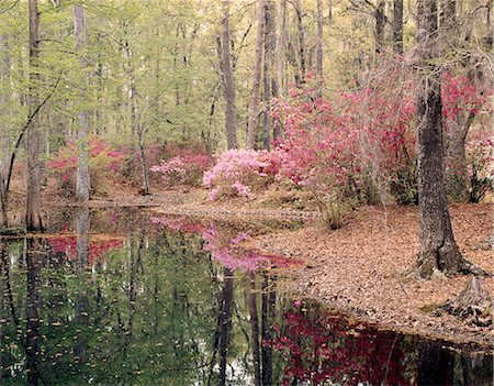south - CYPRESS GARDENS CHARLESTON, SC Stock Photo - Rights-Managed, Code: 846-03163987