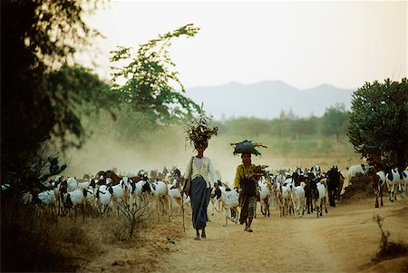 Myanmar (Burma), Bagan, Local women leading herd of goats. Stock Photo - Rights-Managed, Code: 849-02867006