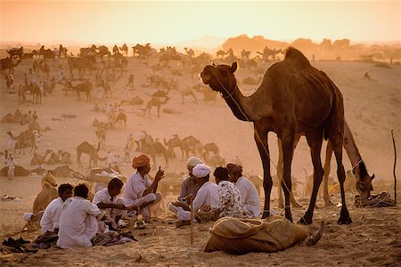 rajasthan camel - India, Rajasthan, Pushkar, Camel traders at the annual Pushkar fair cooking dinner. Stock Photo - Rights-Managed, Code: 849-02867196