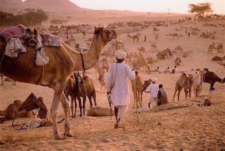 rajasthan camel - India, Rajasthan, Pushkar, General activity at the camel fair. Stock Photo - Rights-Managed, Code: 849-02867199