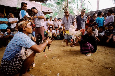 Indonesia, Bali, Cock fight. Stock Photo - Rights-Managed, Code: 849-02867251