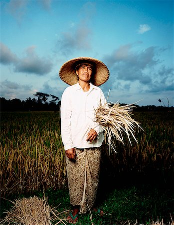 Indonesia, Bali, Ubud, Balinese woman holding rice stalks at harvest time. Stock Photo - Rights-Managed, Code: 849-02867616
