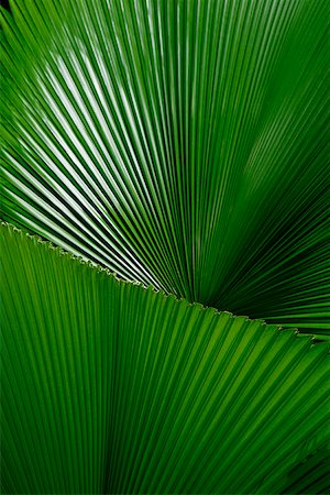 pretty background designs - Close-up of palm leaves, Singapore Stock Photo - Rights-Managed, Code: 849-02860393