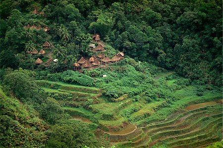 philippine terrace farming - Rice Terraces, Philippines Stock Photo - Rights-Managed, Code: 849-02861019