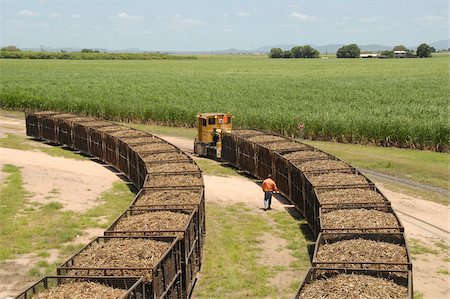 queensland - Machine-cut sugar cane in rail trucks outside mill, Ayr, Queensland, Australia, Pacific Stock Photo - Rights-Managed, Code: 841-05781225