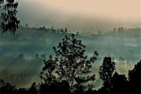 dreamy - Early morning fog over a Ceylon tea plantation, Dickoya, Hill Country, Sri Lanka, Asia Stock Photo - Rights-Managed, Code: 841-05847709