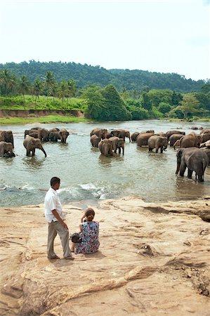 Asian elephants bathing in the river, Pinnawela Elephant Orphanage, Sri Lanka, Asia Stock Photo - Rights-Managed, Code: 841-05847746