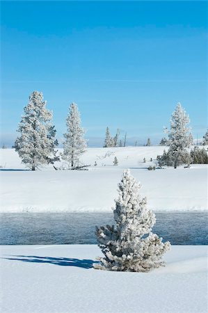 Hoar frost snow-covered tree in Yellowstone National Park, Montana, United States of America, North America Stock Photo - Rights-Managed, Code: 841-05847787