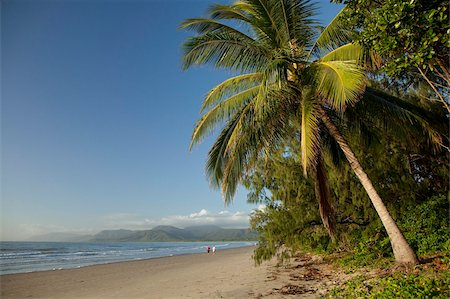 queensland - Four Mile Beach with coconut palm trees, Port Douglas, Queensland, Australia, Pacific Stock Photo - Rights-Managed, Code: 841-05960540