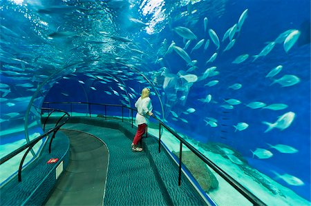 Female tourist at Ocean Aquarium, Shanghai, China, Asia Stock Photo - Rights-Managed, Code: 841-05960676