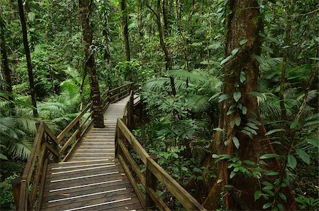 queensland - Boardwalk through rainforest, Daintree National Park, UNESCO World Heritage Site, Queensland, Australia, Pacific Stock Photo - Rights-Managed, Code: 841-05960841