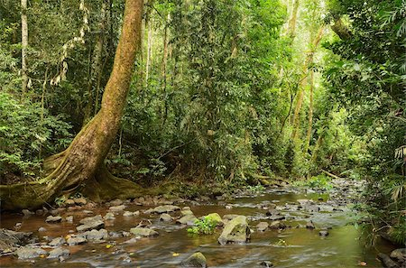 queensland - Millaa Millaa River, Atherton Tableland, Queensland, Australia, Pacific Stock Photo - Rights-Managed, Code: 841-05960861