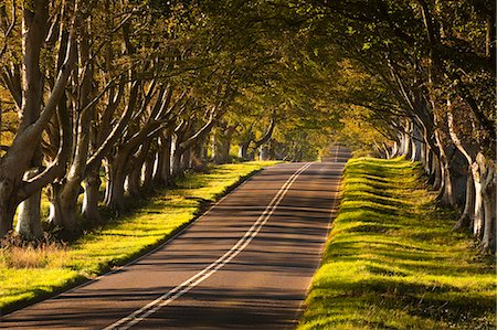 shadow - The winding road through the beech avenue at Kingston Lacy, Dorset, England, United Kingdom, Europe Stock Photo - Rights-Managed, Code: 841-06034285