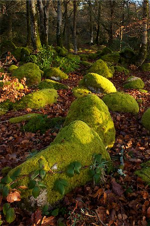 dartmoor national park - Mossy boulders, Dartmoor National Park, Devon, England, United Kingdom, Europe Stock Photo - Rights-Managed, Code: 841-06030590