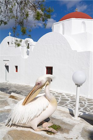 White pelican in Mykonos Town, Island of Mykonos, Cyclades, Greek Islands, Greece, Europe Stock Photo - Rights-Managed, Code: 841-06031119