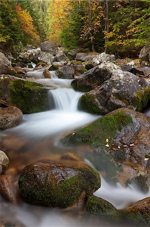streams scenic nobody - Rocky mountain stream through autumn woodland, Tatra Mountains, Slovakia, Europe Stock Photo - Rights-Managed, Code: 841-06031538