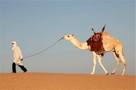 Camel driver in the Sahara desert, near Douz, Kebili, Tunisia, North Africa, Africa Stock Photo - Rights-Managed, Code: 841-06032484