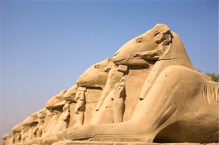 ram (animal) - Ram headed sphinxes leading up to the first pylon at Karnak Temple, Karnak, Thebes, UNESCO World Heritage Site, Egypt, North Africa, Africa Stock Photo - Rights-Managed, Code: 841-06033899