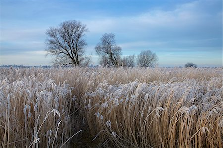 Norfolk Broads winter scene near Ludham Bridge, Norfolk, England Stock Photo - Rights-Managed, Code: 841-06344693