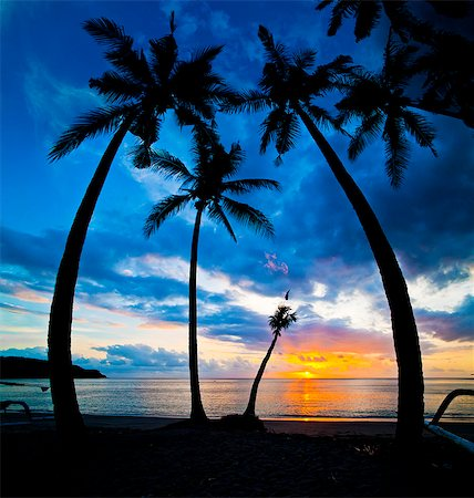 palm - Silhouette of palm trees at sunset, Nippah Beach, Lombok, Indonesia, Southeast Asia, Asia Stock Photo - Rights-Managed, Code: 841-06341146