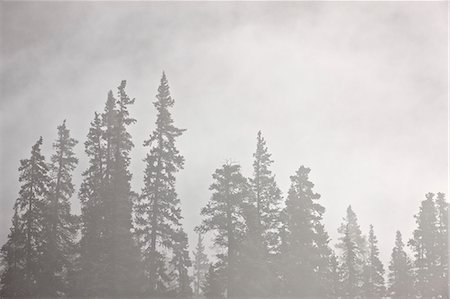 fog (weather) - Evergreens surrounded by fog, Jasper National Park, UNESCO World Heritage Site, Alberta, Canada, North America Stock Photo - Rights-Managed, Code: 841-06342593