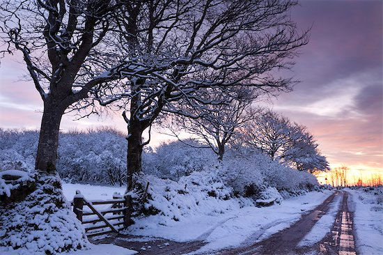 Snow covered trees beside a country lane, Exmoor, Somerset, England, United Kingdom, Europe Stock Photo - Premium Rights-Managed, Artist: robertharding, Image code: 841-06343618