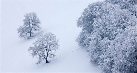 snow - Snow covered trees in The Punchbowl, Exmoor National Park, Somerset, England, United Kingdom, Europe Stock Photo - Rights-Managed, Code: 841-06343631